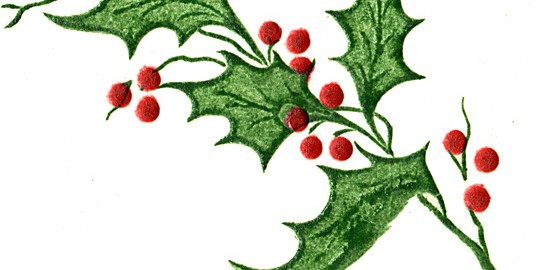 holly-leaves-2